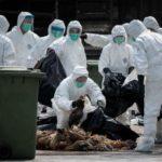 จีนเผยไข้หวัดนกสายพันธุ์ H5N1 กำลังแพร่ระบาดในมณฑลหูหนานที่ตั้งอยู่ติดกับมณฑลหูเป่ย์